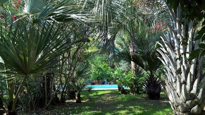 Journées du patrimoine 2018 - Visite commentée Le jardin aux mille et un palmiers