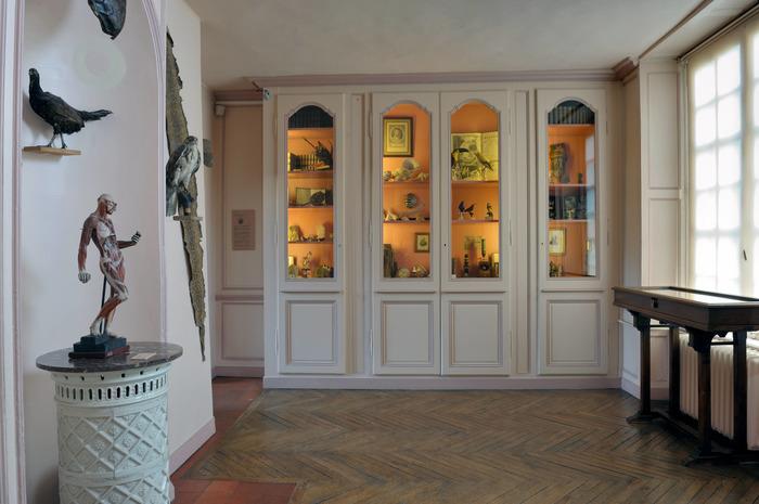 Crédits image : Cabinet de curiosités du musée Flaubert et d'histoire de la médecine