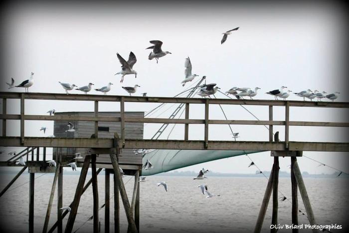 Journées du patrimoine 2018 - Visite d'une pêcherie