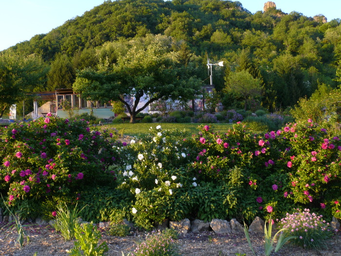 the rose garden of the golden lion is located on an uncultivatedneglected hill the owners wished to show in an oldformer earthground with - Jardin Permaculture