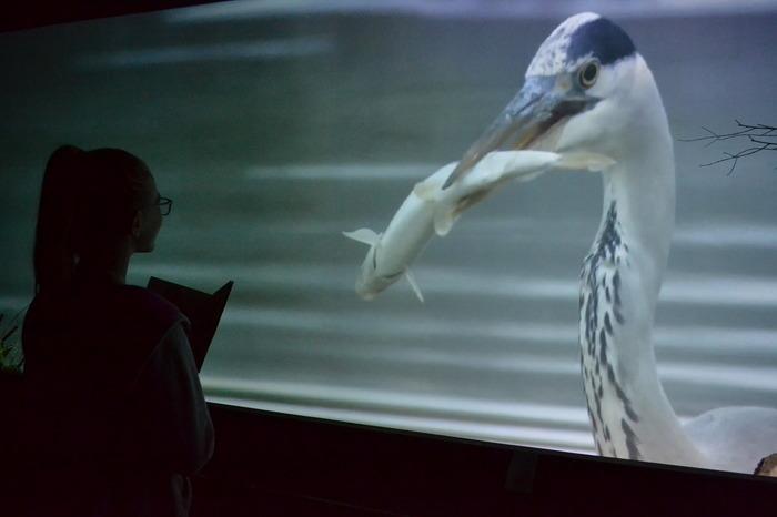Journées du patrimoine 2018 - Visite de l'espace scénographique dédié à la Loire