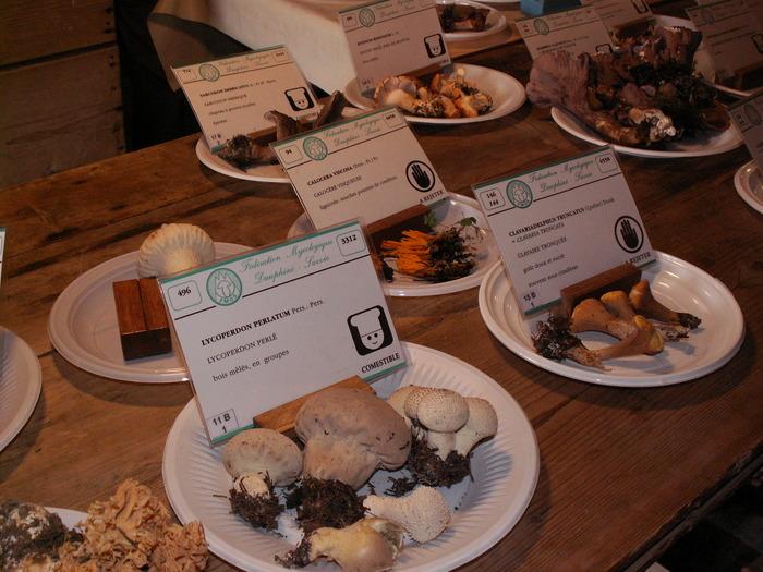 Journées du patrimoine 2018 - Visite de l'exposition de champignons