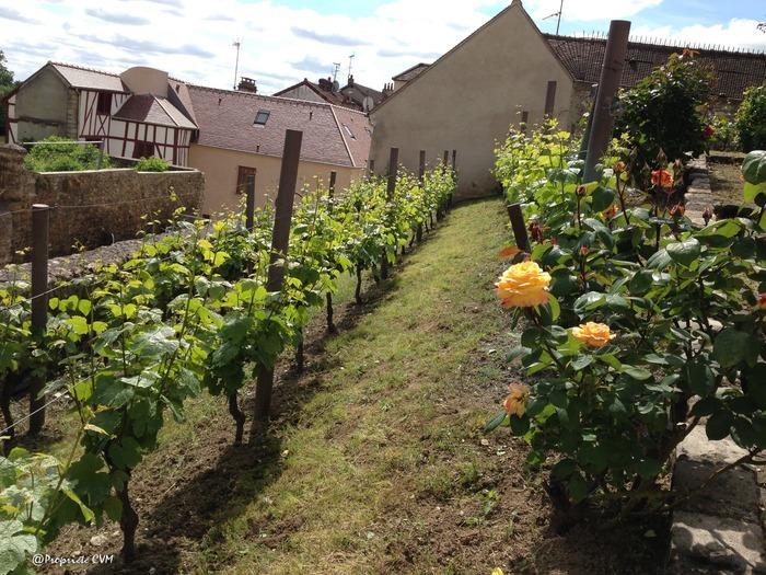 Journées du patrimoine 2019 - Visite découverte de la vigne à Mantes-la-Jolie