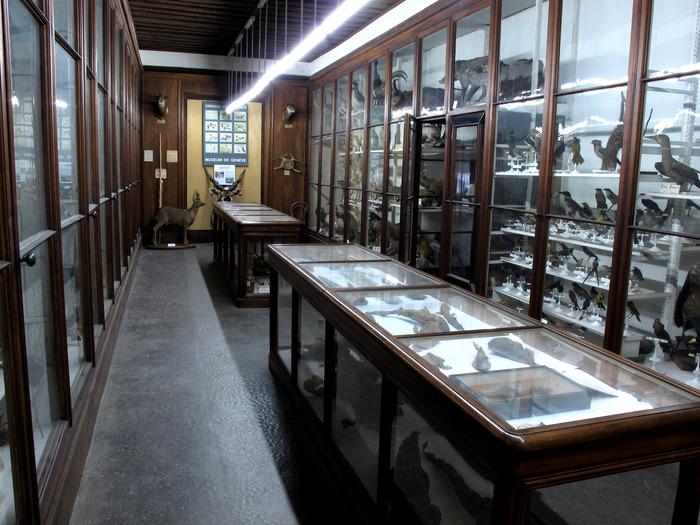 Journées du patrimoine 2018 - Visite libre des collections.
