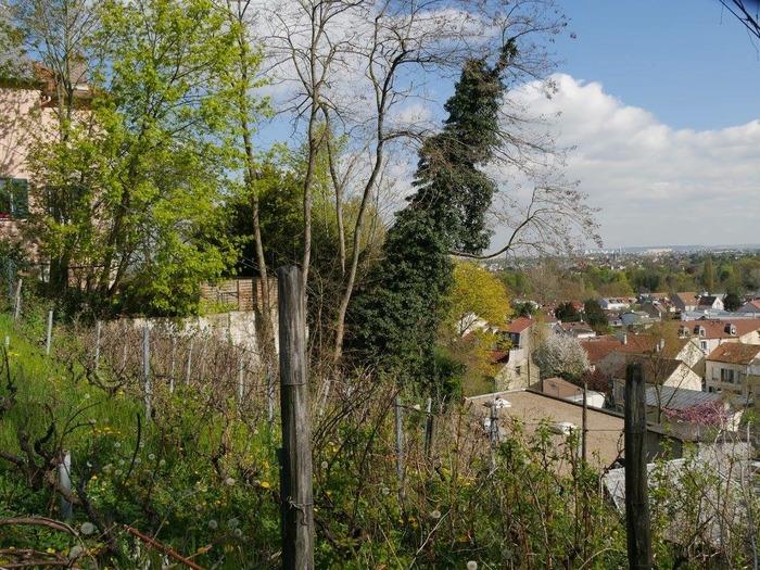 Journées du patrimoine 2019 - Visite des Vignes de Bougival