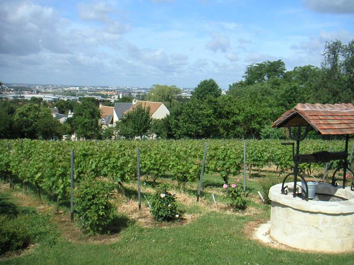 Journées du patrimoine 2018 - Visite des vignes de Sucy