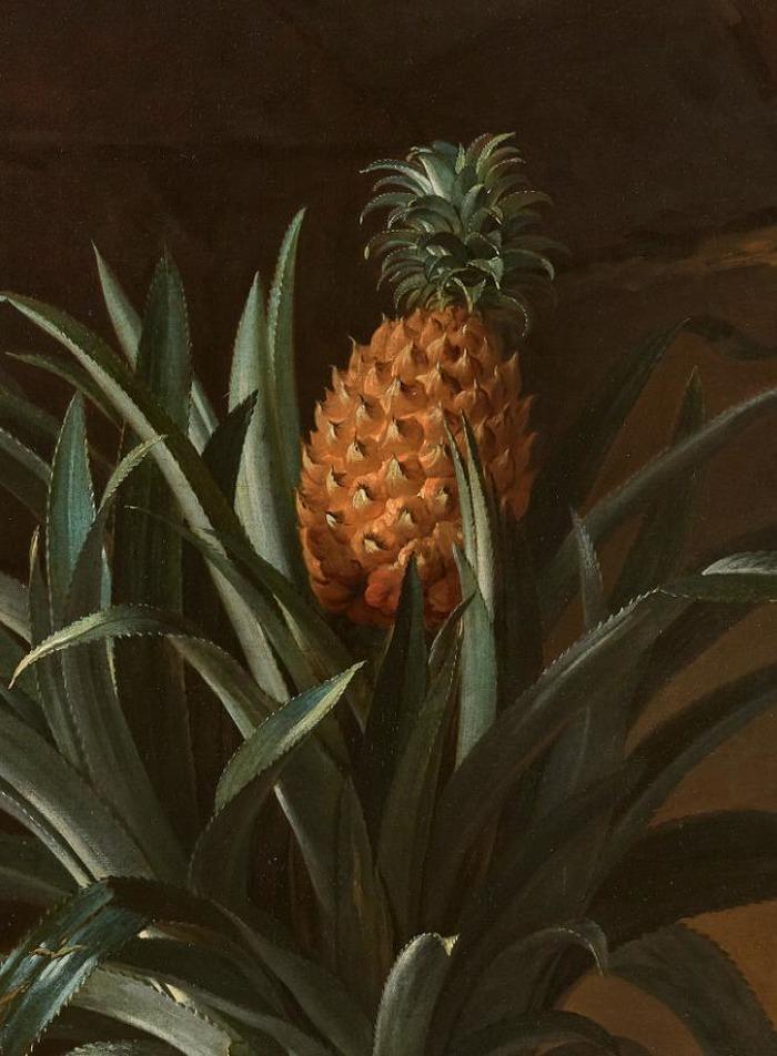 Queen's Kitchen Garden tour: Pineapple
