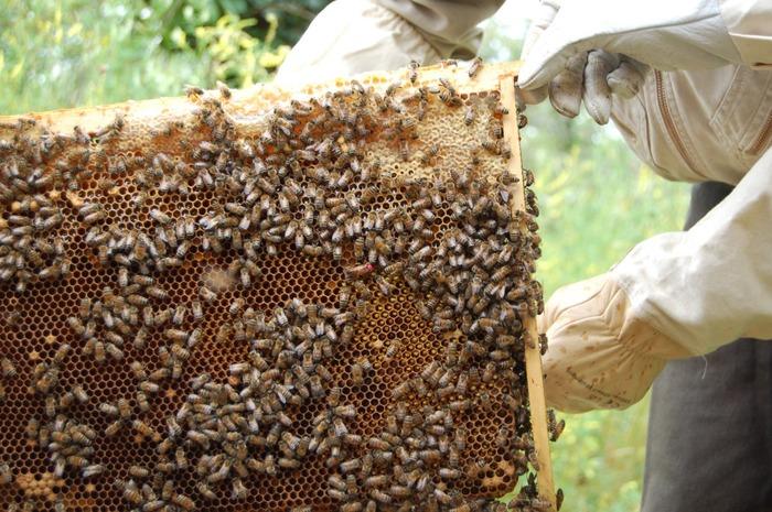 Journées du patrimoine 2018 - Visite du rucher pédagogique
