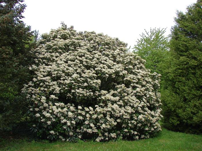 Journées du patrimoine 2018 - Arboretum de la Croix verte