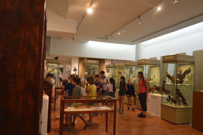 Journées du patrimoine 2018 - Visite guidée dans l'exposition Du cabinet de curiosités à la taxidermie contemporaine à la rencontre du savant Léon Olphe-Galliard.
