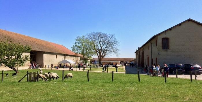 Journées du patrimoine 2017 - Visite guidée de la ferme de l'abbaye : vaches, moutons, miellerie, fromagerie, etc