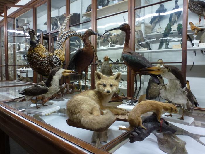 Journées du patrimoine 2018 - Visite commentée des collections.