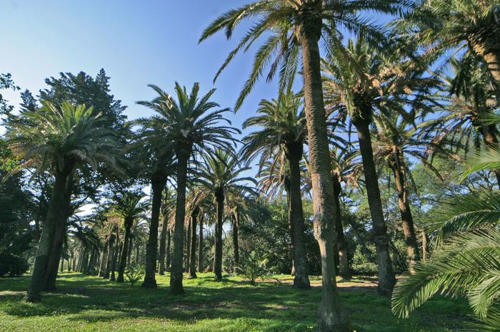 Journées du patrimoine 2018 - Visite guidée du parc botanique par un garde du Conservatoire du Littoral
