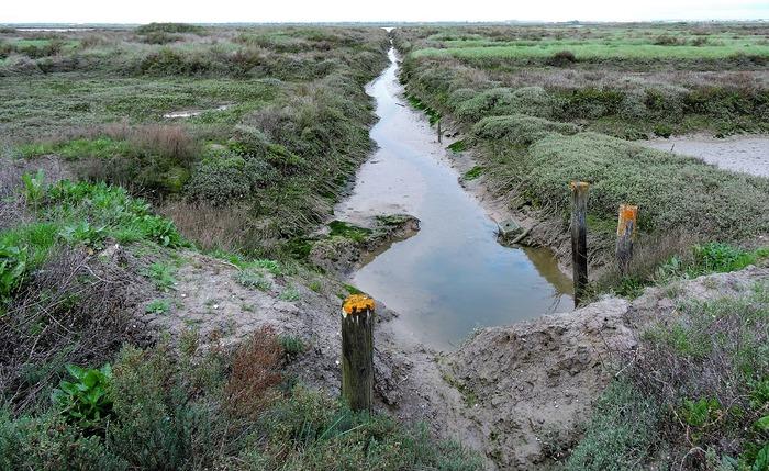 Journées du patrimoine 2018 - Visite guidée du marais maritime : la nature en partage