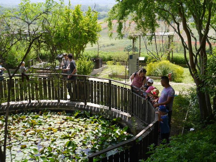 Journées du patrimoine 2018 - Visite guidée tout public du Jardin Conservatoire des Plantes Tinctoriales de Lauris