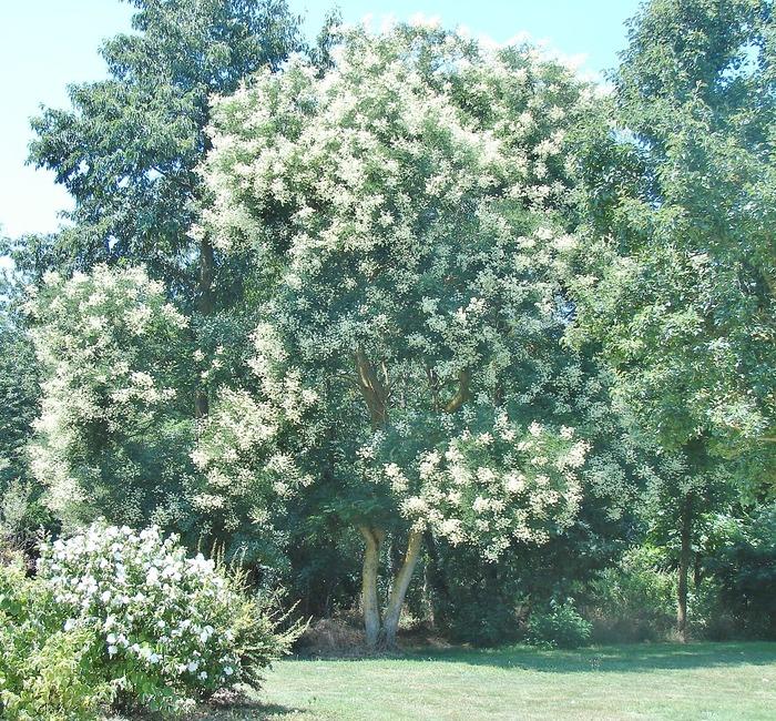 Journées du patrimoine 2018 - Découverte de l'arboretum