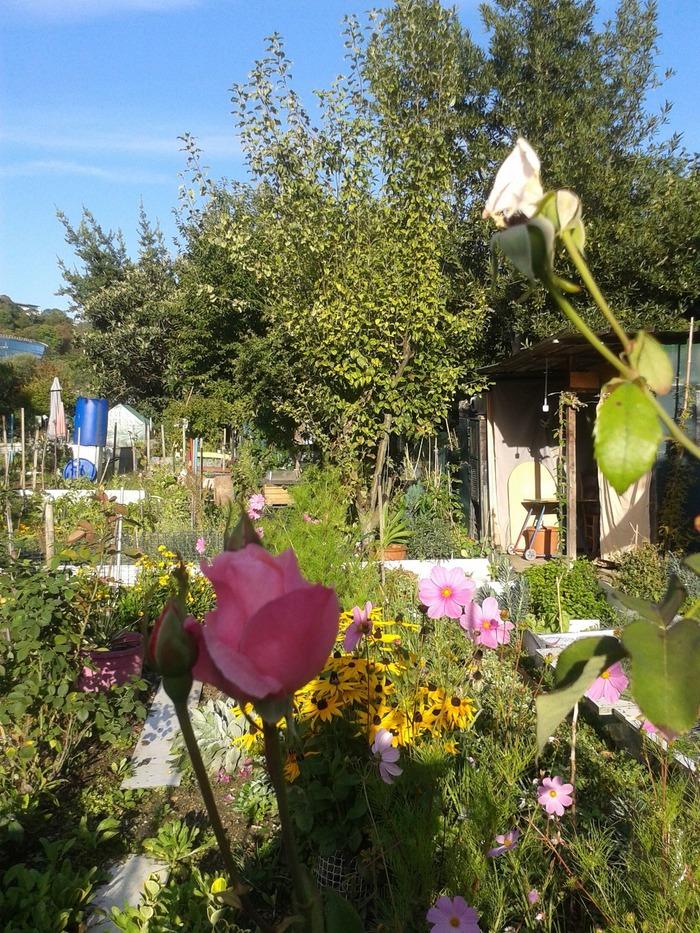 Journées du patrimoine 2018 - Visite libre des jardins familiaux de la pointe de l'île