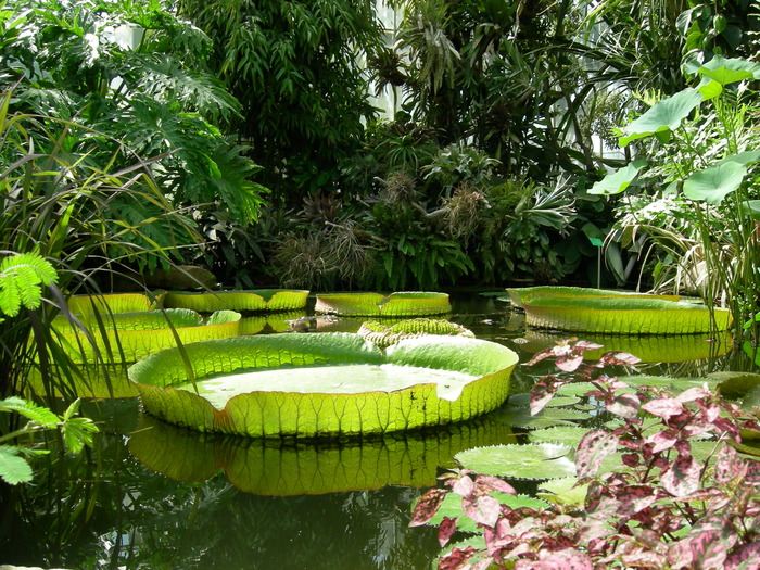 jardin des sens belfort Visit free of Conservatories of tropical collections