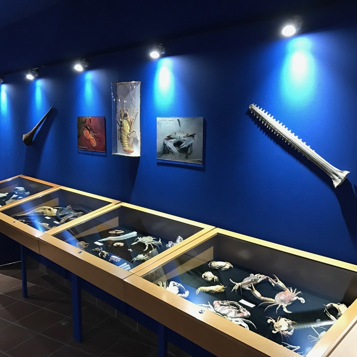 Journées du patrimoine 2018 - Visite libre du Musée de la mer