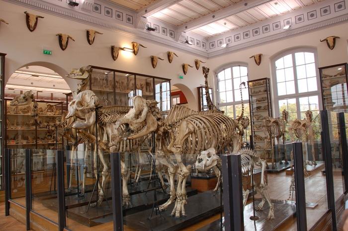 Journées du patrimoine 2018 - Visite libre du musée Fragonard de l'École nationale vétérinaire d'Alfort