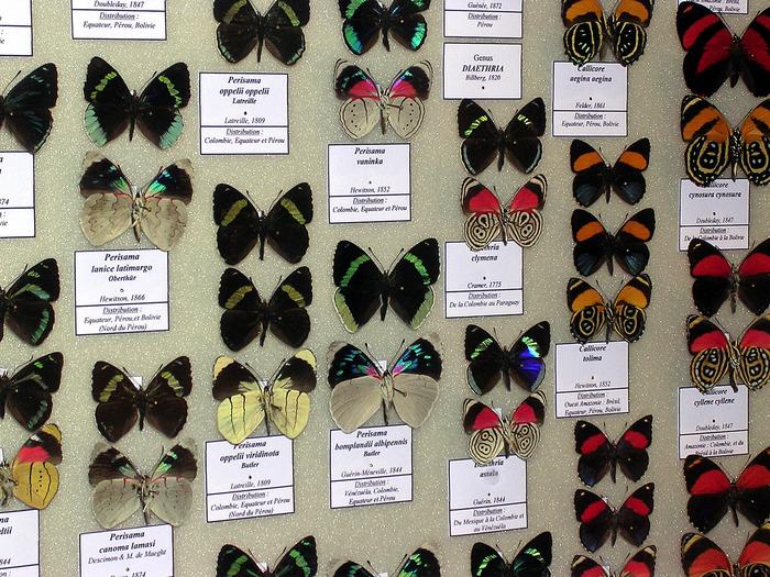 Journées du patrimoine 2018 - Visite libre du Muséum des Papillons.