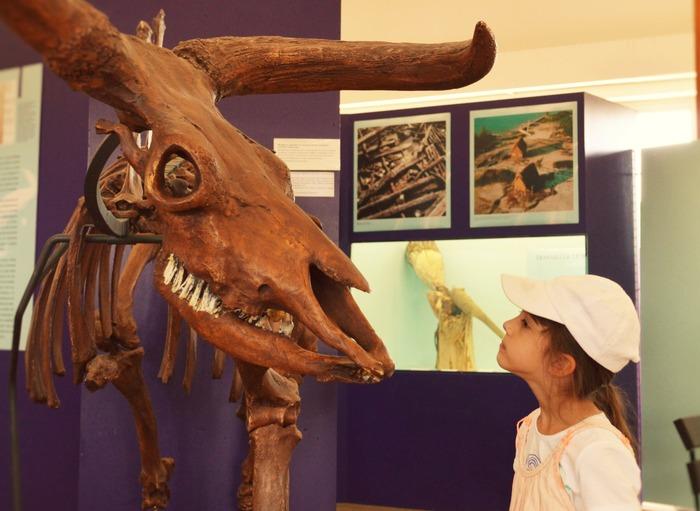 Journées du patrimoine 2017 - Visite libre de l'exposition à la Salle des fêtes de Clairvaux