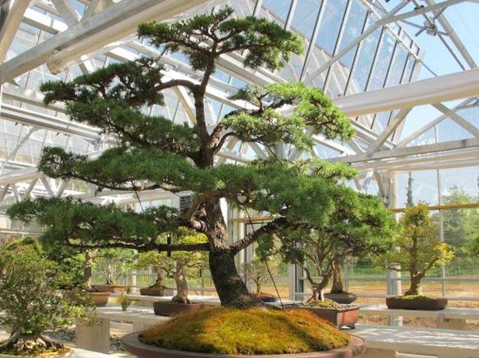 Journées du patrimoine 2018 - Vente et dédicaces d'ouvrages (Arboretum)