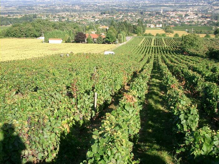 Journées du patrimoine 2017 - Vous vivez entourés de vignobles,dans le Beaujolais, alors venez découvrir son histoire