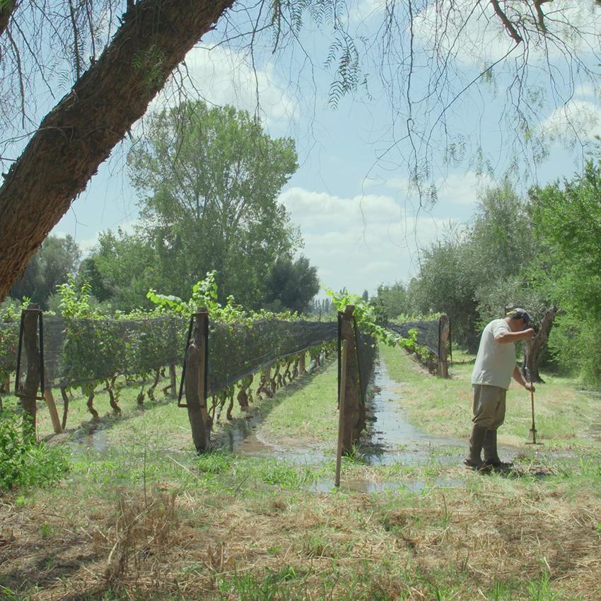 Argentine : une oasis au pied de la Cordillère