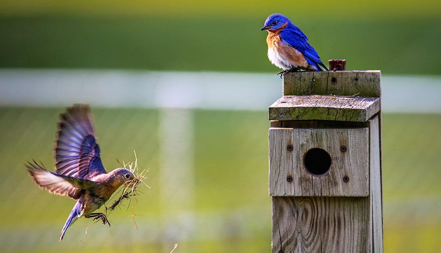Atelier création de mangeoire à oiseaux
