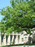 Journées du patrimoine 2016 -À la découverte de l'Abbaye de Sablonceaux