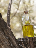 Journées du patrimoine 2016 -A la découverte de l'olivier du Midi de la France et de ses produits