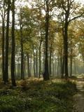 Journées du patrimoine 2016 -À la découverte de la gestion de la forêt