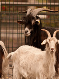 Rendez Vous aux Jardins 2018 -A la découverte des animaux du Parc Bordelais