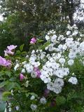 Rendez Vous aux Jardins 2018 -Visite libre du château du Pin et ses jardins