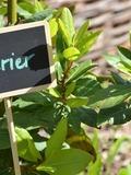 Rendez Vous aux Jardins 2018 -A la découverte des simples dans le jardin médiéval