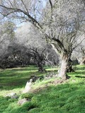 Rendez Vous aux Jardins 2018 -Ajaccio - Les Milelli, de l'oliveraie à l'arboretum, trois siècles d'histoire naturelle