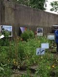 Rendez Vous aux Jardins 2018 -1ère séance des ateliers