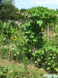 Rendez Vous aux Jardins 2018 -Moments de convivialité au jardin