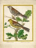 Journées du patrimoine 2016 -Animation de découverte des oiseaux du Parc Buffon à Montbard