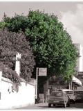 Journées du patrimoine 2016 -Arbres connus et méconnus
