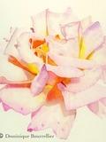 Rendez Vous aux Jardins 2018 -Atelier d'aquarelle botanique