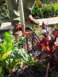 Journées du patrimoine 2016 -Atelier de jardinage