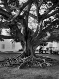 Journées du patrimoine 2016 -Balade autour des arbres du Barachois
