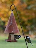 Rendez Vous aux Jardins 2018 -Balade dans le jardin aux oiseaux