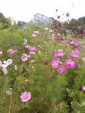 Rendez Vous aux Jardins 2018 -Balade dans les jardins de Val de Flore