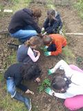 Rendez Vous aux Jardins 2018 -Balade de jardin en jardin à Elbeuf-sur-Seine