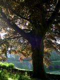 Rendez Vous aux Jardins 2018 -Balade découverte: le jardin public, histoire et botanique