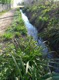 Journées du patrimoine 2016 -Balade le long du canal de la Martinette