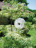 Rendez Vous aux Jardins 2018 -Visite des jardins de Lapiteau